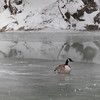Frozen Goose, North RIver