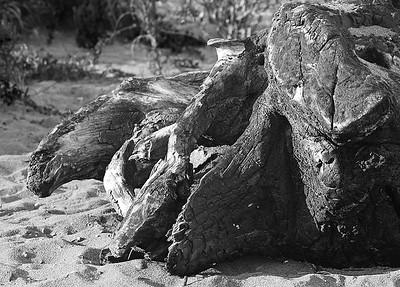 Driftwood (60361875)