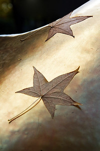 Leaves 2 (105903373)