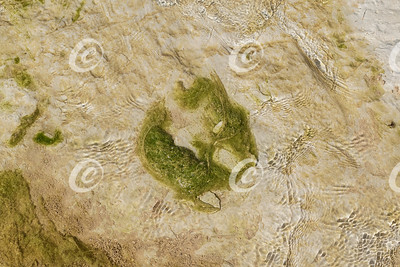 Horseshoe Shaped Pond Scum and Ripples in a Slow Moving Desert Stream