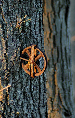 Rusty tree wheel: I'm still debating whether or not I should keep this picture...I kind of like the light but, well - I'm not sure...
