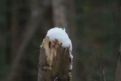 """Snow Cap: My goal here was to try and shoot snow with """"detail"""". I've been having a hard time with snow, it's either too white or too gray. I farted around with the white balance and this is the best I could do (using auto)."""