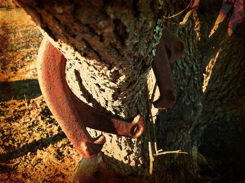 Shoeless Horses