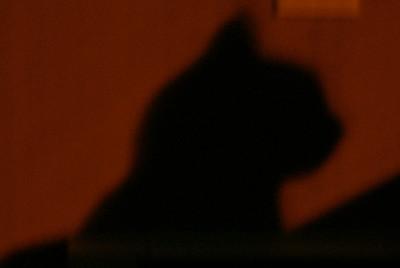 Silhouette pet