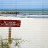 Pets Are Not Allowed on Beach sign posted in the white sands of Dania Beach, Florida