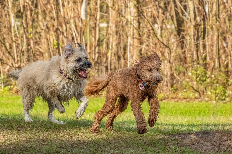 Run Lilly Run