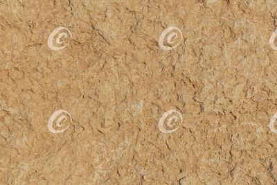Detailed Section of a Slab of Dolomite Stone from the Makhtesh Ramon Crater in Israel