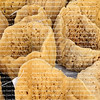 Natural sea sponges on display at Tarpon Springs, Florida, know as the sponge capital of the world.