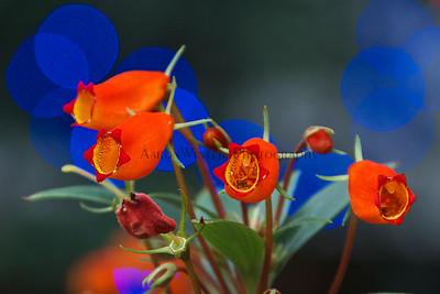 Lamberton Flowers 2012