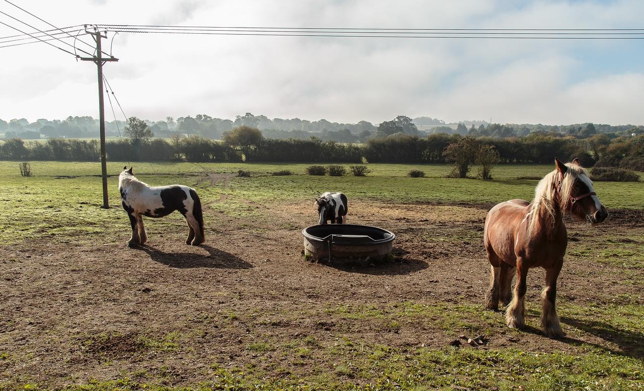 Odiham Deer Park, with horses grazing