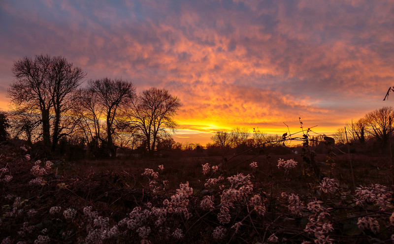 Winter sunset at North Warnborough Greens