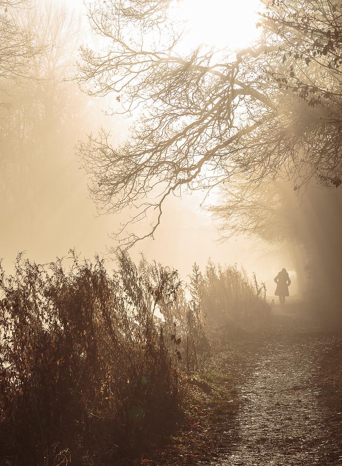 Basingstoke Canal walk along towpath in misty sunshine