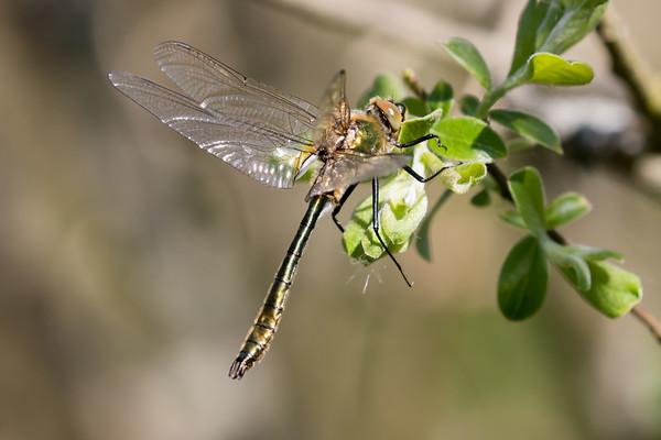 Dragonflies 2016