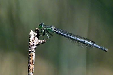 female near Lake Cuyamaca 05/03