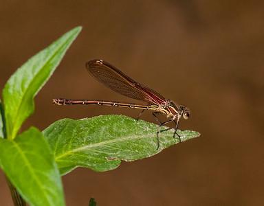Female, Ashland Nature Center