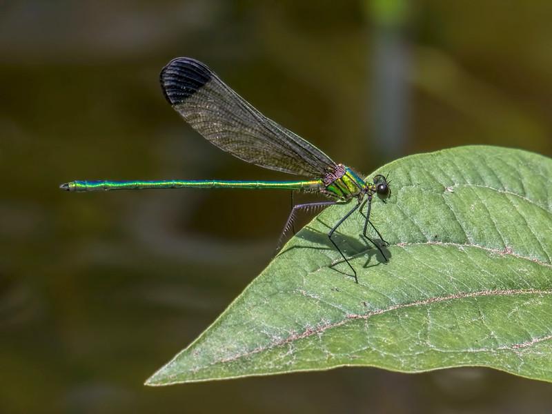 Male, Greensboro Christian Park, MD