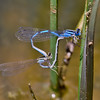 Pair in Wheel, Lum's Pond SP