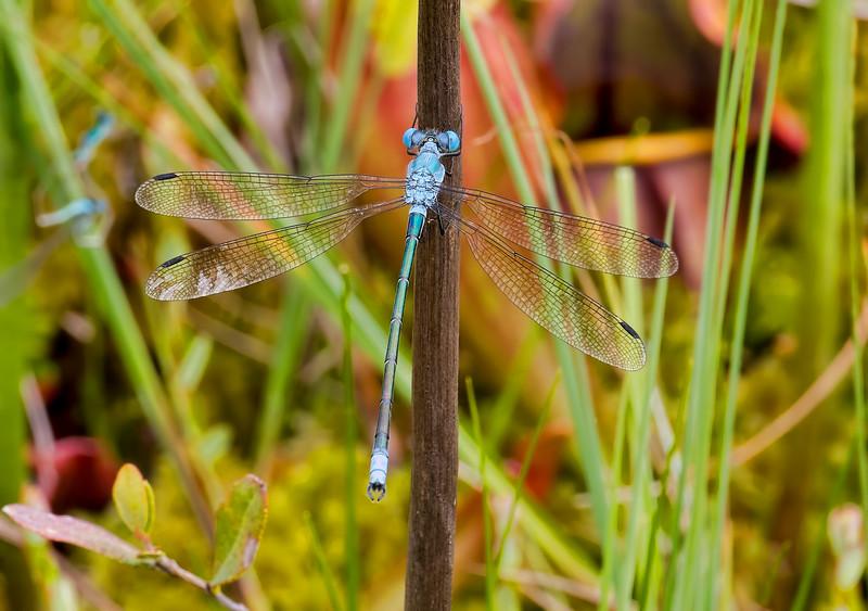Male, Jam Pond, Chenango County, NY