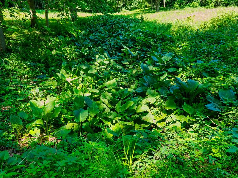 Habitat, Ramsey Run, Brandywine Creek SP