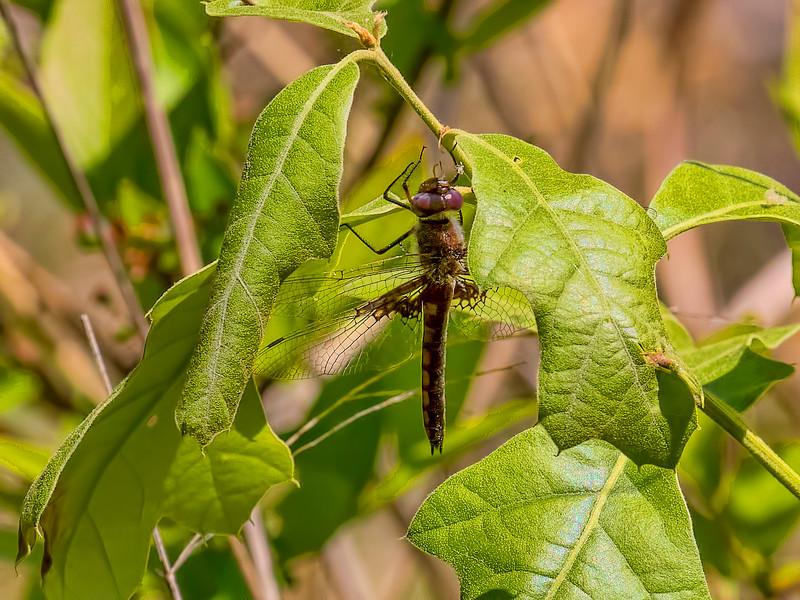 Female, Woodland, NJ
