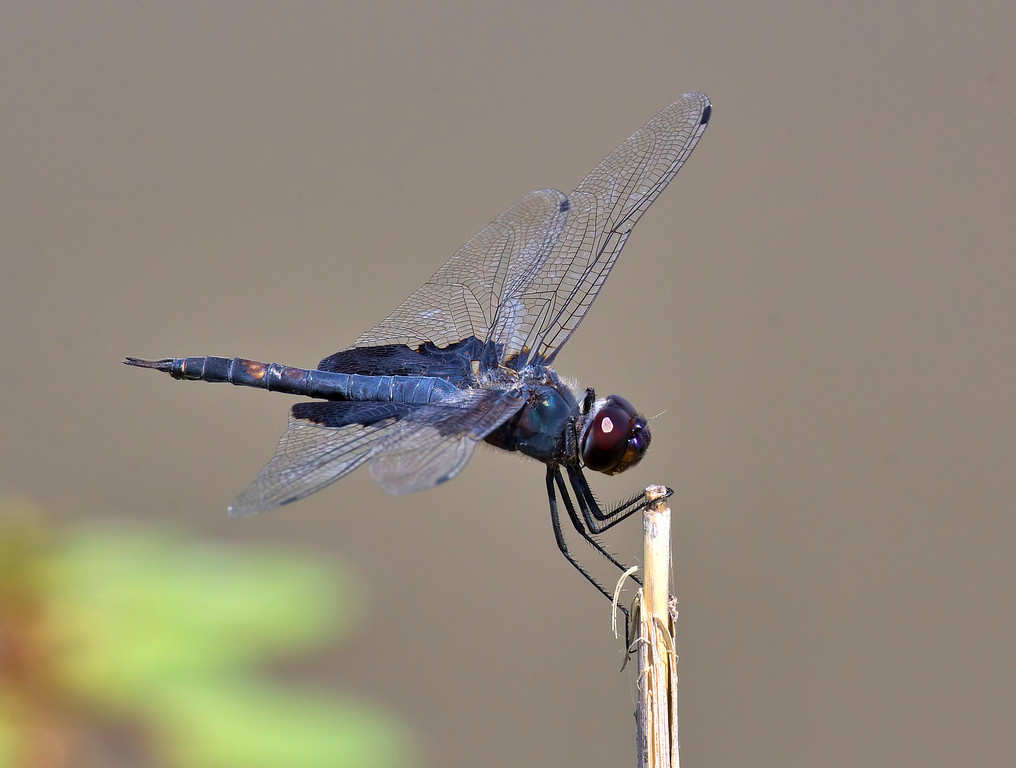 Black Saddlebags male