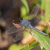 Male, Elk River Park, Elkton, MD