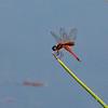 Male, Dankworth Pond, Graham County, AZ