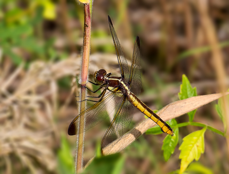 Female, Idylwild, MD