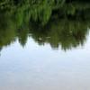 Common Green Darner (Anax junius), male, Lake Cheston