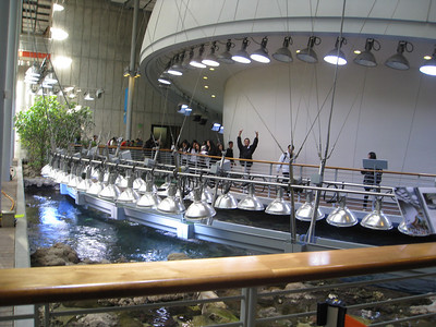 9th Grade Trip to California Academy of Sciences