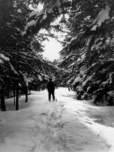 Charles Stone snowshoeing camp road, 1951