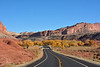 Cottonwoods blazing with colour along Scenic Highway 24 approaching Fruita, Capitol Reef National Park