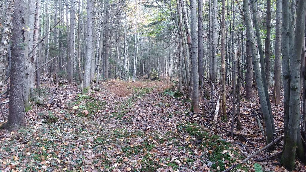 Cleared trail.