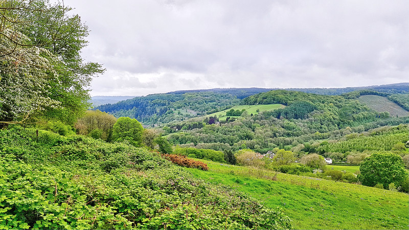It is very green along here, in the Wye Valley.   The Wye Valley Way passes along the other side of the river.