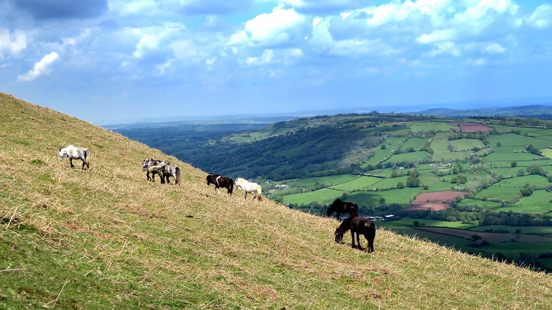 A steep climb up to the ridge in the company of horses.