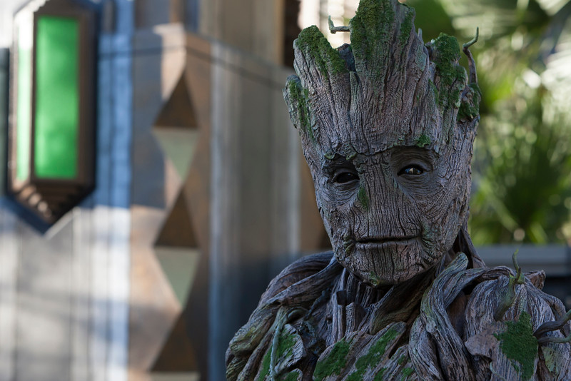 """'GUARDIANS OF THE GALAXY: AWESOME DANCE OFF!' — Groot visits with guests during """"Guardians of the Galaxy: Awesome Dance Off!"""" at Disney California Adventure Park where they will hear him utter his three favorite words """"I am Groot!"""" Guests will find excitement throughout Hollywood Land during Summer of Heroes with the Avengers Training Initiative featuring Black Widow and Hawkeye, and heroic encounters with Black Widow, Captain America and Spider-Man. (Joshua Sudock/Disneyland Resort)"""