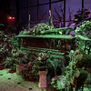 Haunted Mansion at Disneyland Park - Casket in the Conservatory