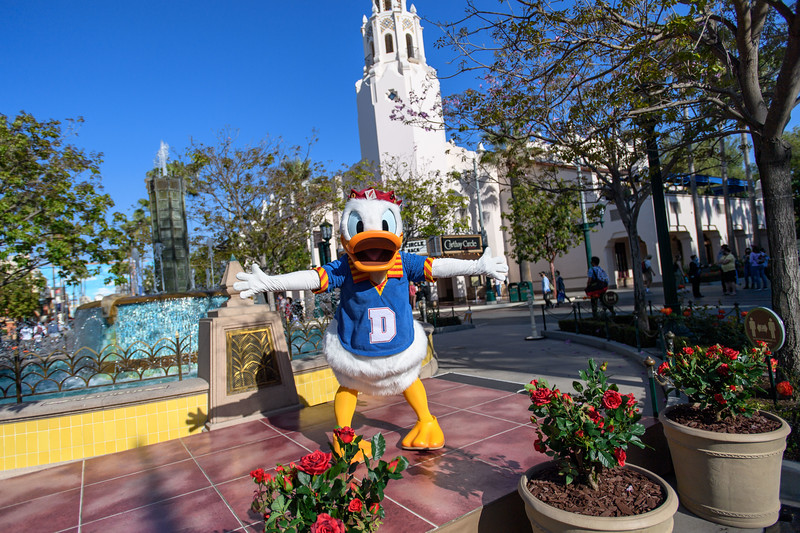 Magic Returns to Disneyland Resort Theme Parks - Donald Duck at Disney California Adventure Park