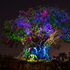 Tree of Life Awakens at Disney's Animal Kingdom at Night