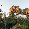 Pandora - The World of Avatar at Disney's Animal Kingdom