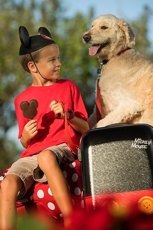 Walt Disney World Resort Hotels going pet friendly from today
