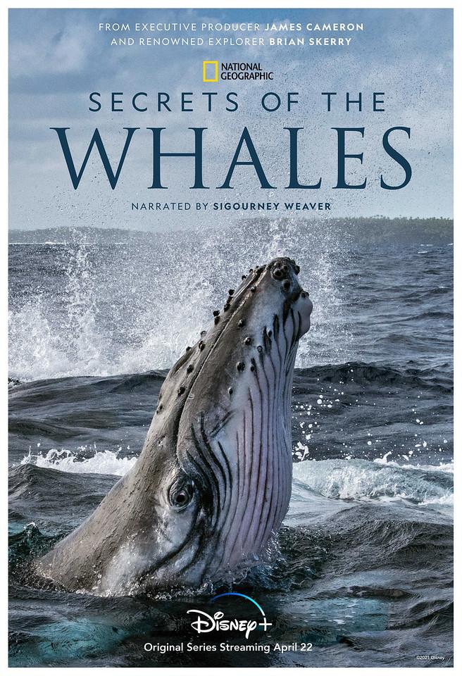 disney plus Secrets of the Whales poster