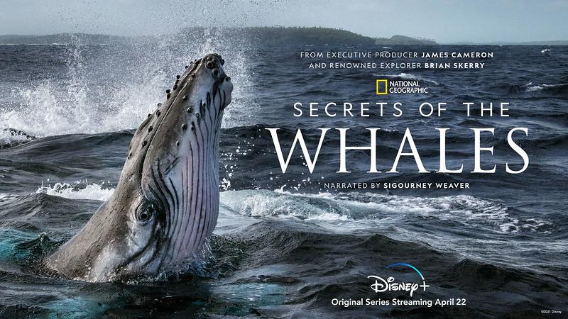 disney plus Secrets of the Whales