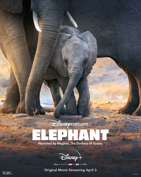 Disneynature ELEPHANT coming to #DisneyPlus with DOLPHIN REEF and PENGUINS on April 3