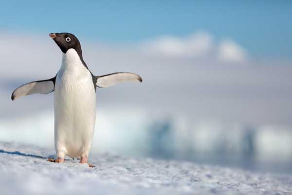 PENGUINS coming to El Capitan Theatre for super limited-time engagement