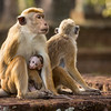 Disneynature MONKEY KINGDOM