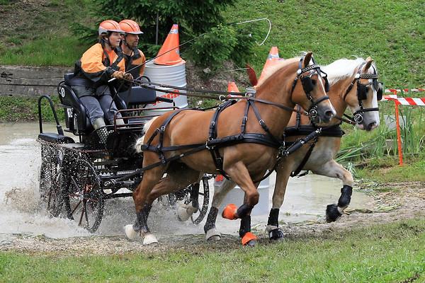 Sport Pferdesport Offizielles Fahrturnier 2008
