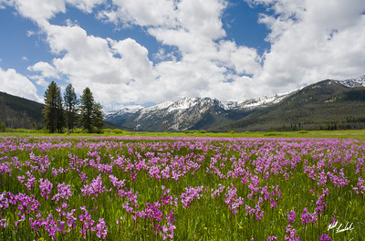 Elk Meadow bloom