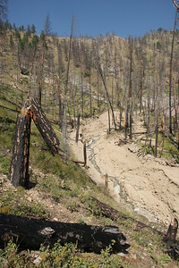 """Look at the piles of logs at the """"high water"""" mark of the debris flow."""
