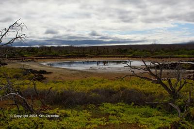 Pond on Serro Dragon, Isla Sanat Cruz 11/06/08